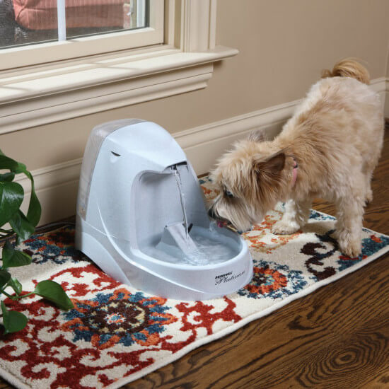 Petsafe automatic water bowl for dogs and cats