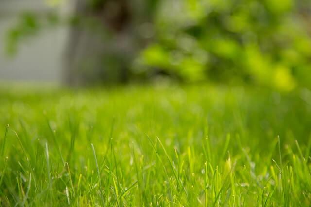 Bermuda grass is a warm-season grass.