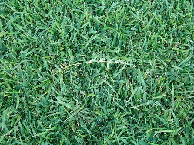 Centipede grass is a warm-season grass.