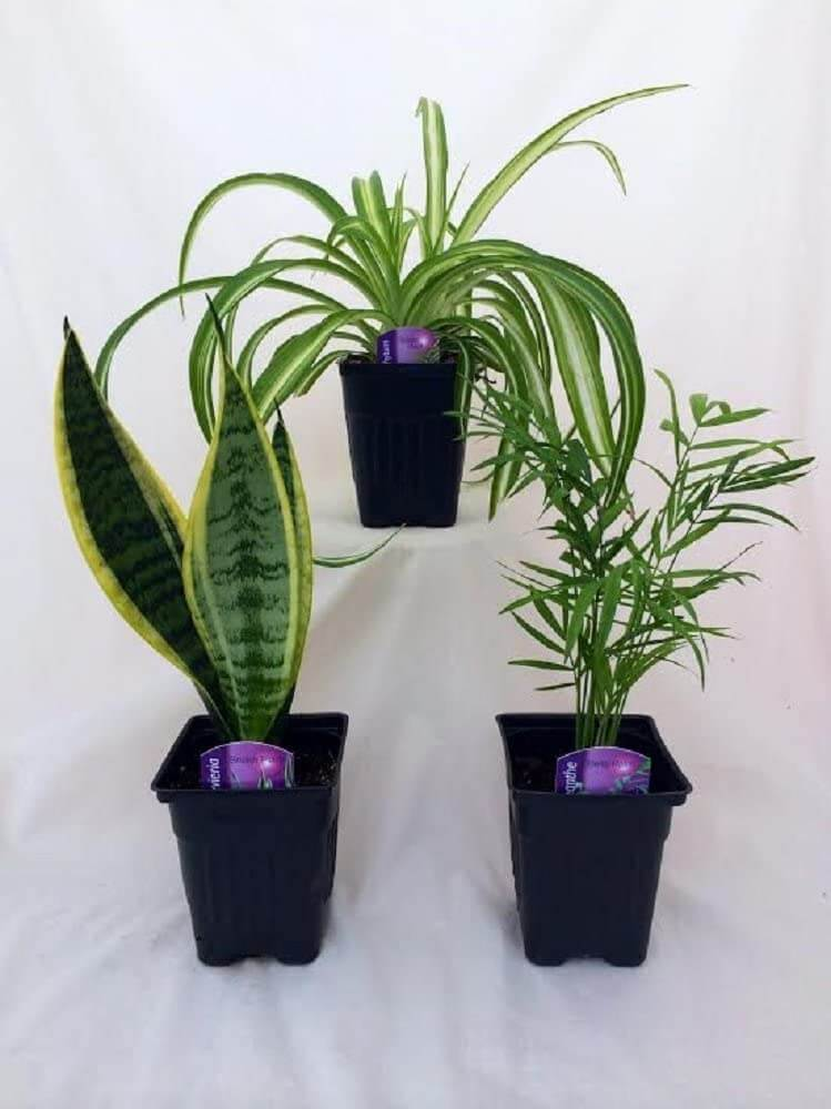 Plant variety pack by Jm Bamboo that can tolerate low light.
