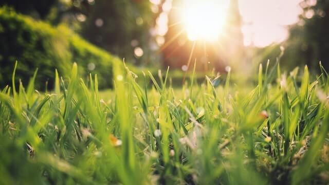 Noticing grass features is one of the best ways to identify what type of grass you have.