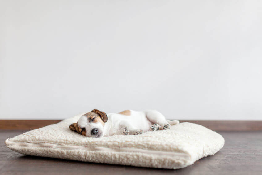Are heated dog beds safe?