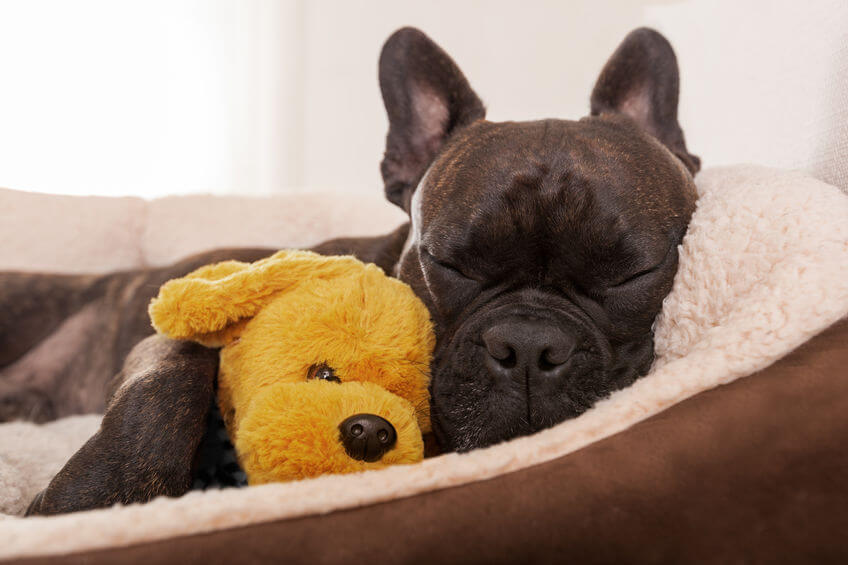 How can I get my dog to stop chewing his bed?