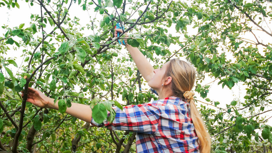 Pruning your plants before winter is an important part of fall home maintenance.