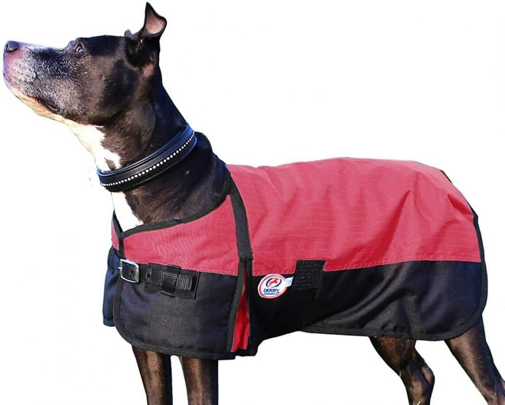 Horse Tough winter coat for dogs by Derby.
