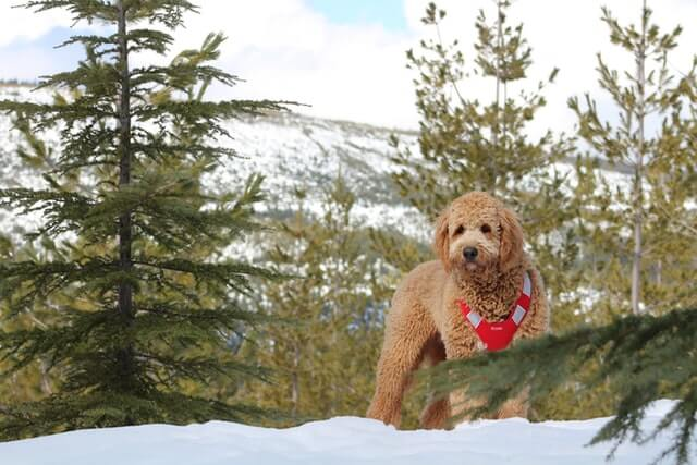 Tips for keeping your dog safe in wintertime.