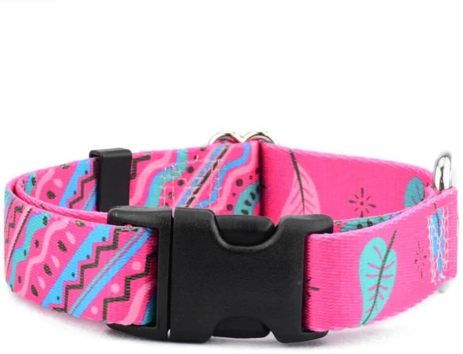 Two Hounds Design adjustable dog collar with buckle.