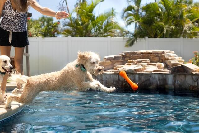 Should you wash your dog after swimming in the pool?