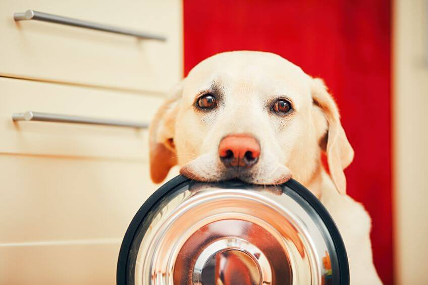 What is the proper way to store dog food?
