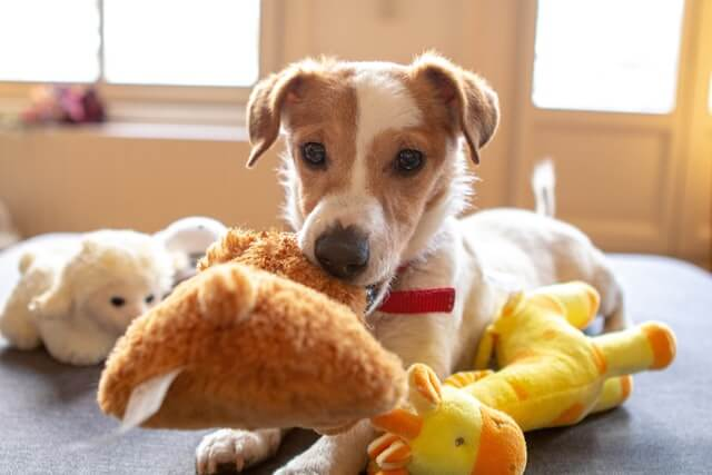 What should you put in a dog room?