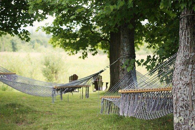 Do hammocks kill trees?