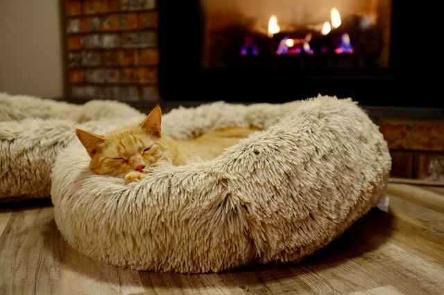 What is the best type of cat bed?