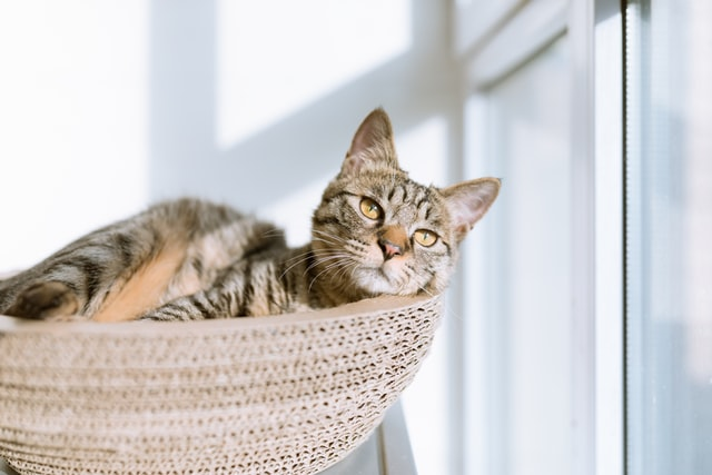 Where should you put your cat's bed?
